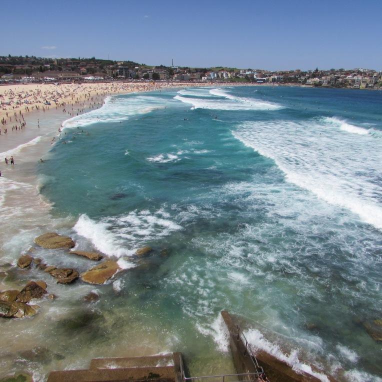 Tour delle spiagge di sydney parte 1 hi mate for Cucinare meduse